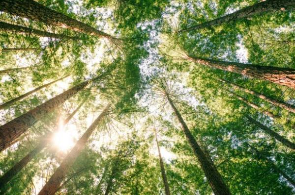 Để chống lại biến đổi khí hậu cần phải trồng bao nhiêu cây xanh, con số sẽ khiến bạn choáng váng!