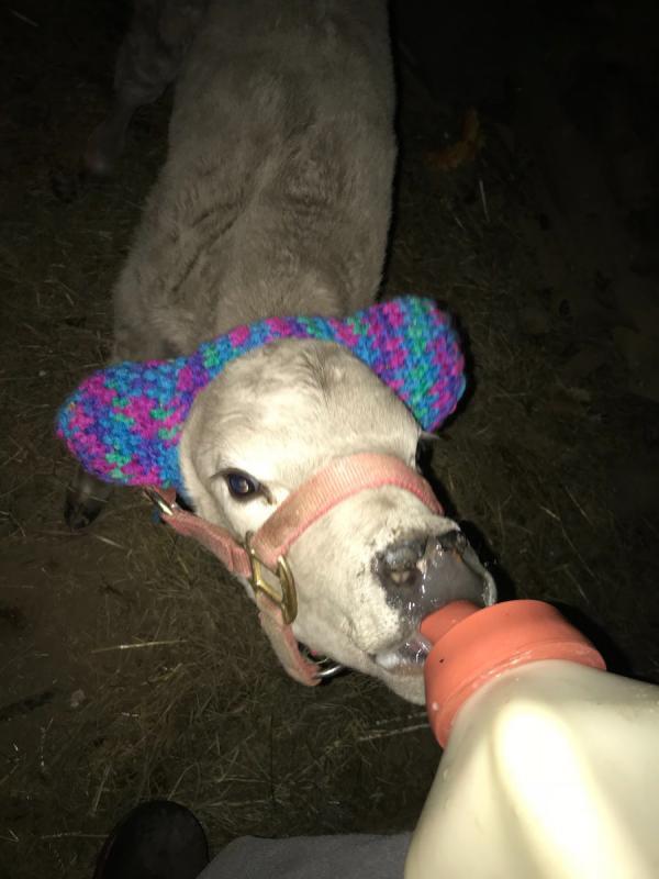 Thời trang mùa lạnh cho gia súc đang trở thành chủ đề đáng yêu nhất tuần qua