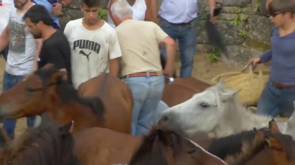 Phẫn nộ lễ hội vật ngựa được tổ chức thường niên tại Tây Ban Nha
