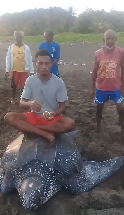 Nhóm người vô ý thức cưỡi lên lưng rùa biển