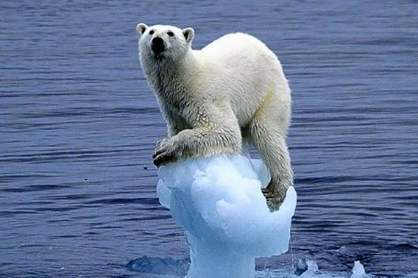 Gấu Bắc Cực vào tù, chuyện gì đã xảy ra?
