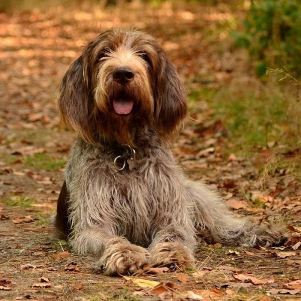 25 giống chó đắt nhất thế giới khiến bạn phải 'khóc hận' vì không đủ tiền rước về nuôi