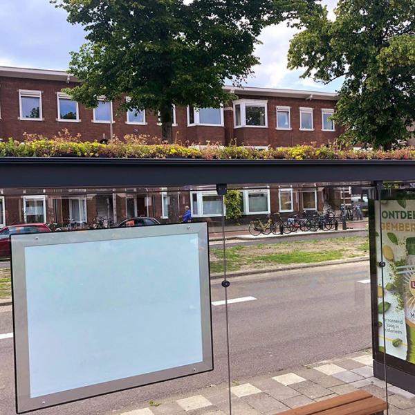Kì diệu câu chuyện Hà Lan biến 316 trạm đỗ xe bus thành nơi sinh sống cho ong
