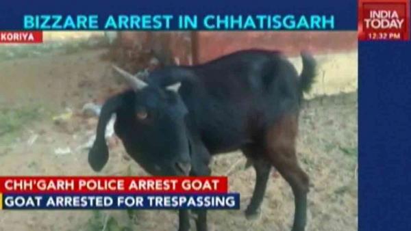 Chuyện khó tin: Đến thú vật cũng bị cảnh sát bắt bỏ tù, thậm chí tuyên án tử hình