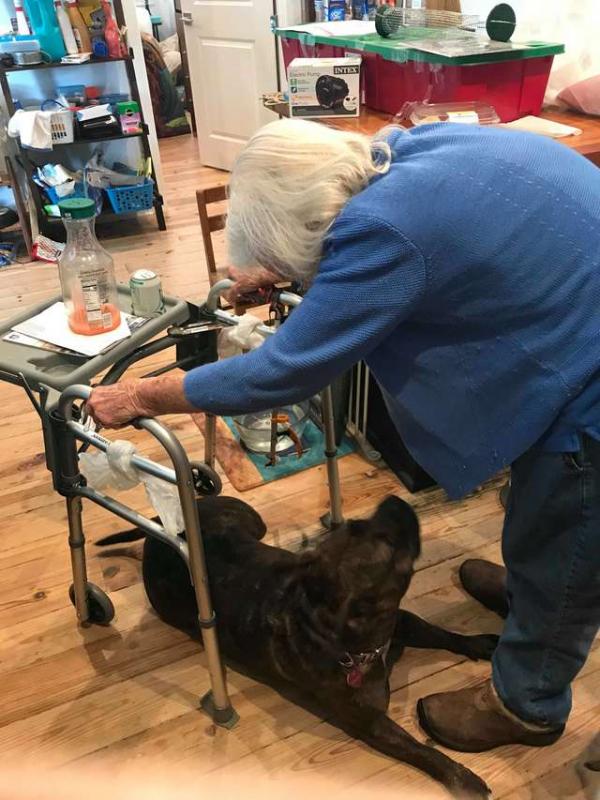 Câu chuyện cảm động về một cô chó bị bỏ rơi luôn đi theo bảo vệ người bà của mình