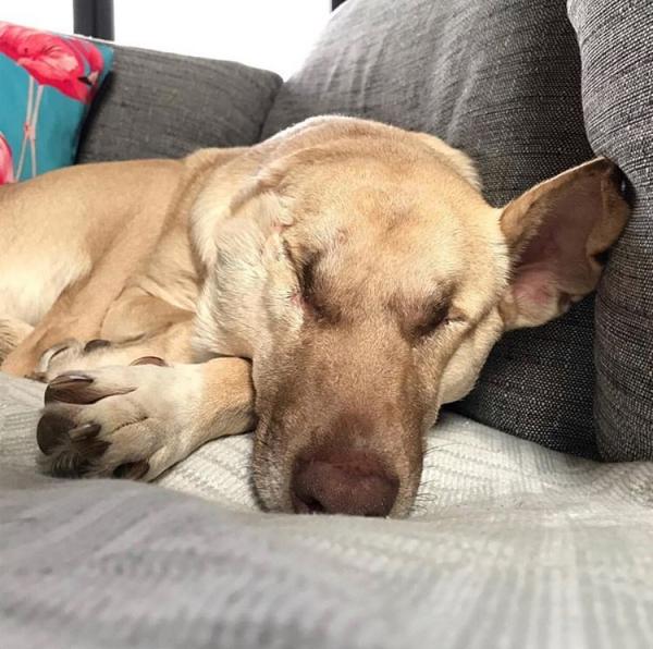 Cô chó mù, mất một bên tai trở thành câu chuyện truyền cảm hứng sống cho bao người