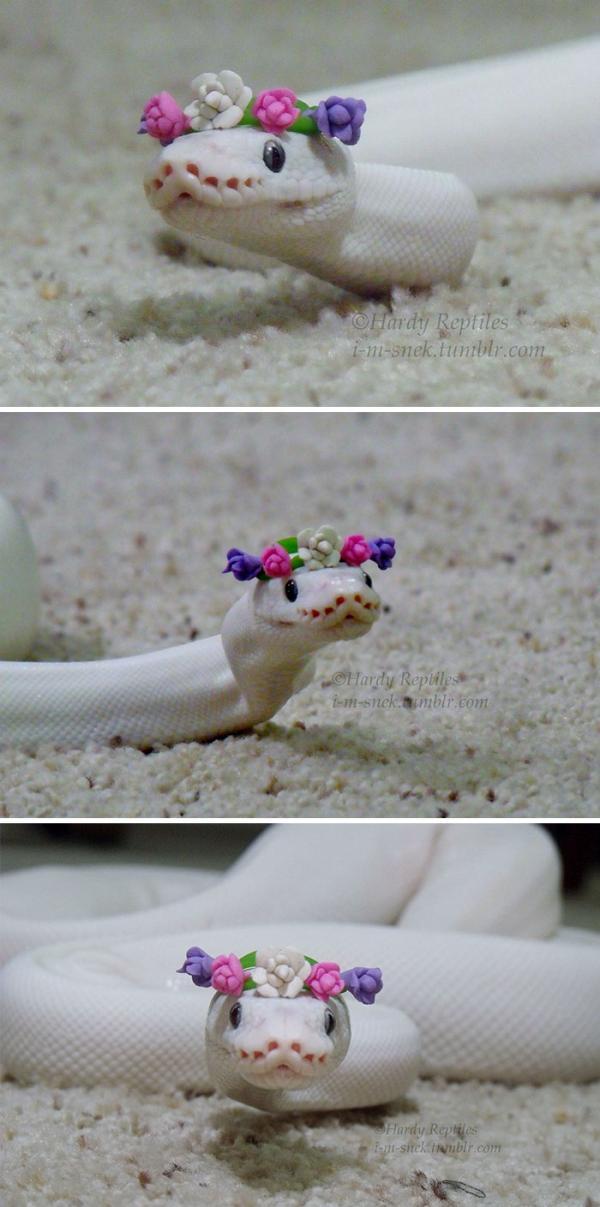 Chùm ảnh siêu dễ thương của các bé rắn khiến bạn không còn sợ loài vật này nữa