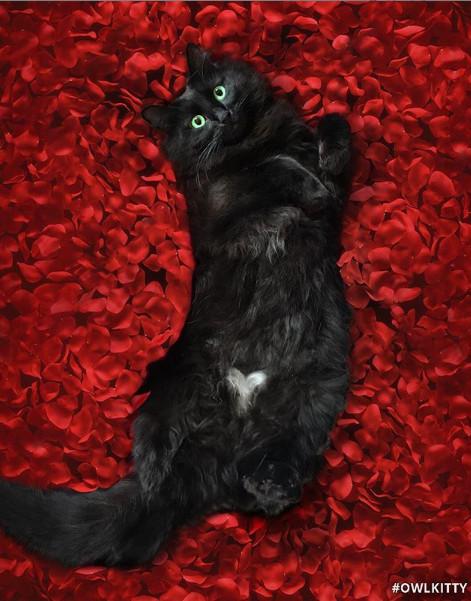 Xem mèo đoán phim: Nhìn trailer này, bạn có biết đây là bộ phim kinh điển nào không?