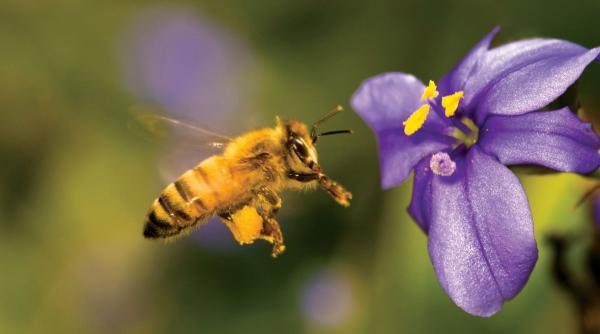 Phát hiện khoa học cực 'dị': Thường xuyên cho hoa 'nghe' tiếng ong, mật hoa sẽ ngọt ngào hơn?