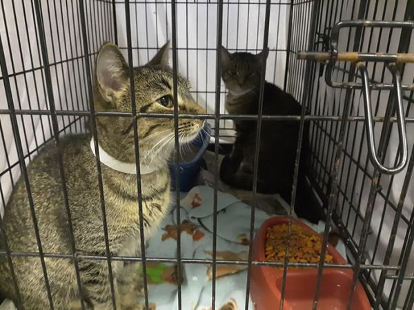 Cảnh sát cho phép người dân trả tiền vé phạt bằng cách quyên góp thức ăn cho mèo