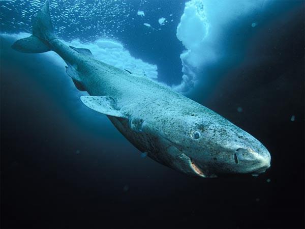 Những sinh vật sống dai nhất đã tồn tại trên hành tinh chúng ta