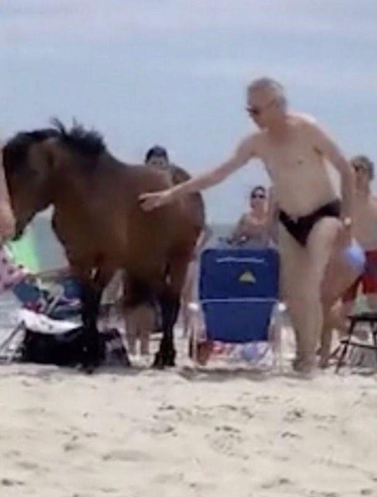 Bất chấp biển cấm vẫn cố 'nựng' động vật, du khách phải nhận cú đá 'trời đánh' từ chú ngựa