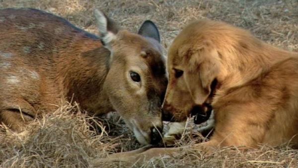 Tin không, động vật cũng có thú cưng riêng và cách chăm pet còn vô cùng độc đáo