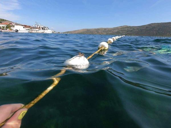 Giữa biển cũng xuất hiện NHỆN khiến dân tình than khóc 'thà gặp cá mập còn hạnh phúc hơn'
