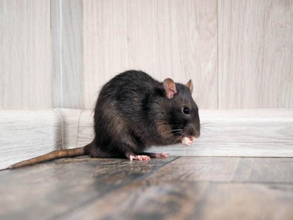 Vì nhiều lý do, động vật đôi khi cũng chọn cách tự kết liễu cuộc đời mình
