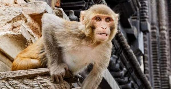 Đâu phải chỉ con người mới gây ra tội ác, những động vật dưới đây chính là ví dụ