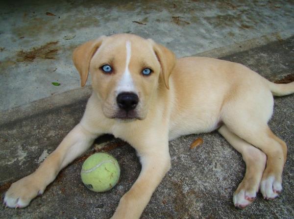 Những bé chó lai độc lạ chỉ cần nhìn qua một lần là nhớ nhau mãi mãi