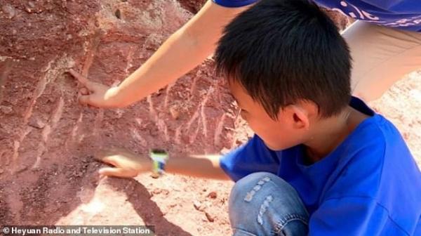 Cậu bé 10 tuổi phát hiện tổ trứng khủng long khi đang tò mò khám phá xung quanh bờ sông