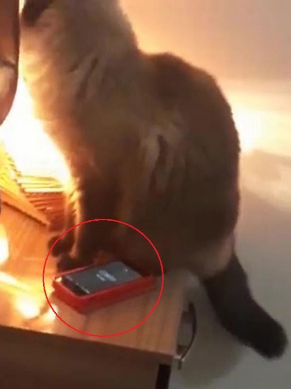 Chú mèo láu cá tắt đồng hồ khiến chủ ngủ quên và bị muộn làm