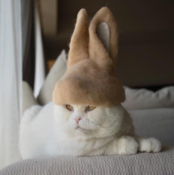 'Sen' làm những chiếc mũ dễ cưng từ chính lông của 'boss' và tạo thành trào lưu tại Nhật Bản