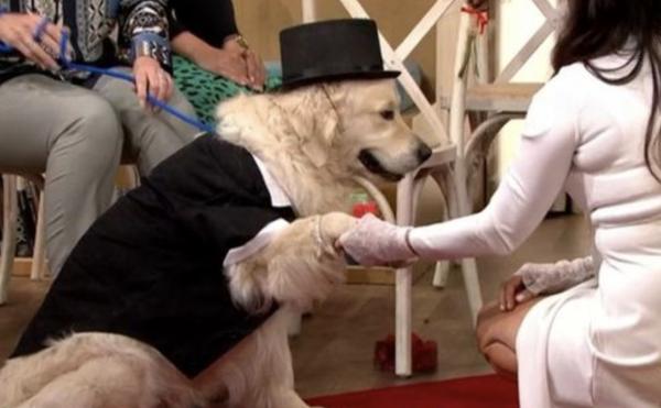 Sau 221 lần hẹn hò thất bại và 4 lần hủy hôn, một phụ nữ Anh quyết định kết hôn với chó cưng