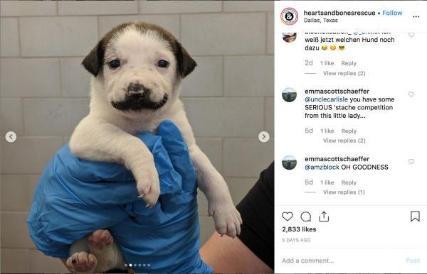 Chú cún có bộ ria mép chuẩn quý ông hiện đang là ngôi sao mới nổi trên MXH