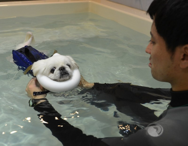 Nuôi chó ở Nhật: Nghề chơi cũng lắm công phu!