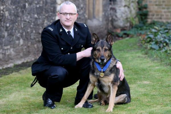 Kẻ tấn công chú chó cảnh sát trở thành người đầu tiên bị tống giam theo Luật Finn