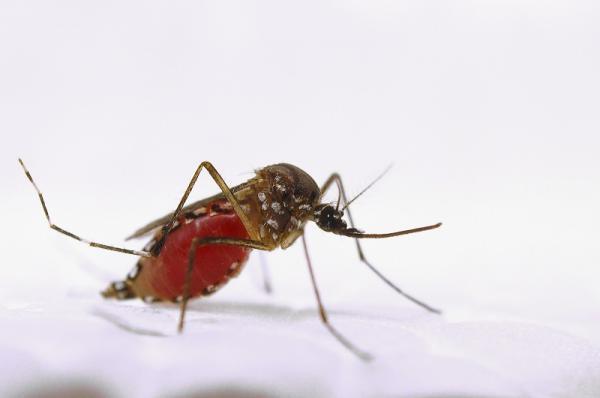 Nhà 'muỗi quyền' kêu gọi con người nên để cho muỗi thoải mái hút máu nuôi con