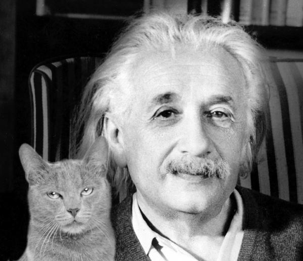 Nghiên cứu khoa học gây bất ngờ: Những người nuôi mèo thường thông minh hơn!
