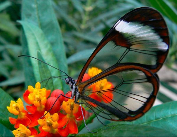 Vẻ đẹp của 18 loài động vật có thân mình trong suốt được gọi là tuyệt tác của tạo hóa