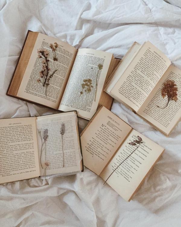Các từ vựng độc đáo chỉ dành riêng cho hội mê sách