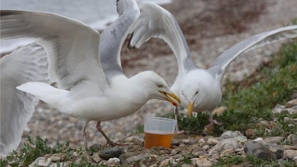 Góc hài hước: Động vật cũng như người, một khi nhậu xỉn thì toàn làm những điều bẽ mặt