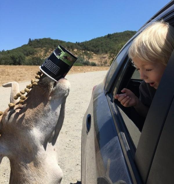 Để có ảnh chụp động vật để đời thì chụp đẹp cũng không bằng bắt được khoảnh khắc hoàn hảo