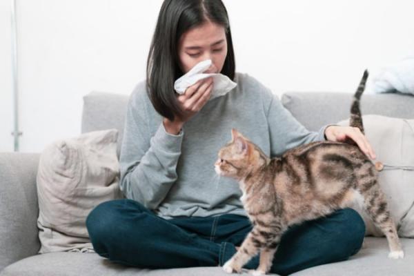 Tin vui cho hội yêu mèo: Các nhà khoa học phát triển thành công vắc-xin ngăn chặn dị ứng lông mèo