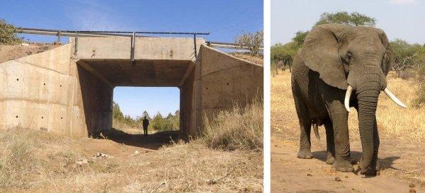 'Tròn mắt' trước những lối đi đặc biệt chỉ dành riêng cho động vật