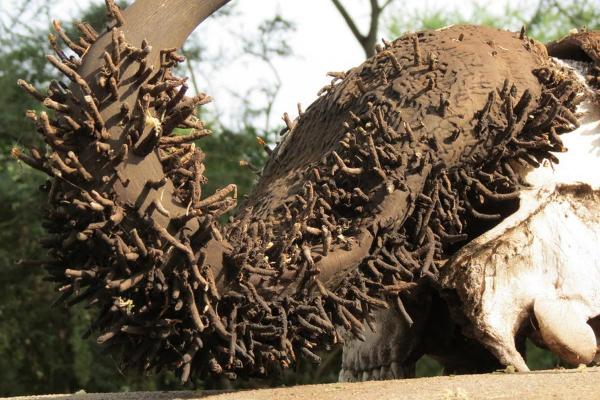 Rùng rợn như phim kinh dị: Điều gì sẽ xảy ra nếu một thi thể bị phân hủy tự nhiên?