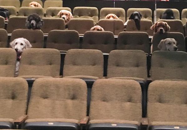Buổi trình diễn nhạc kịch đặc biệt dành cho những khán giả bốn chân