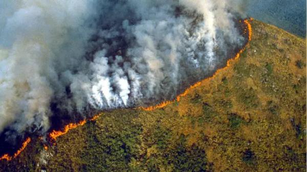 Hoả hoạn rừng Amazon đang dần tiến đến 'điểm bùng phát', huỷ diệt 1/3 hệ sinh thái rừng