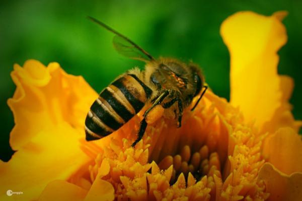 Điều gì sẽ xảy ra khi loài ong bị tuyệt chủng?
