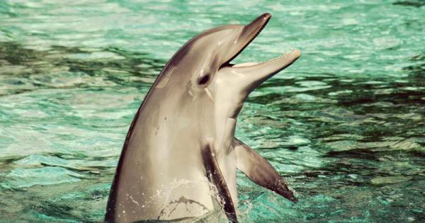 Bị bắt làm việc quá sức, cá heo con 9 ngày tuổi chết trong lúc biểu diễn tại công viên nước