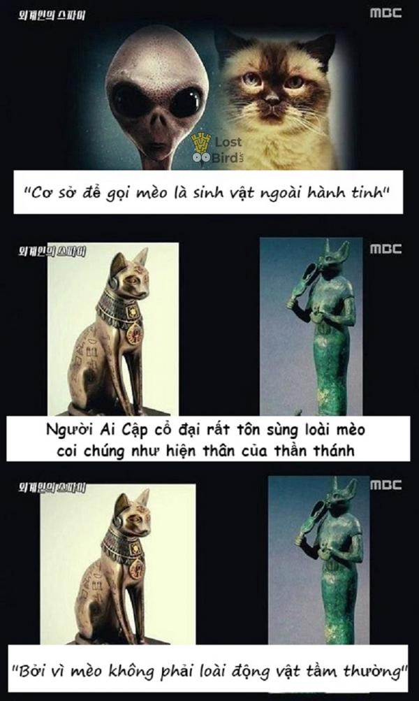 Loạt bằng chứng thuyết phục cho thấy mèo là gián điệp của người ngoài hành tinh
