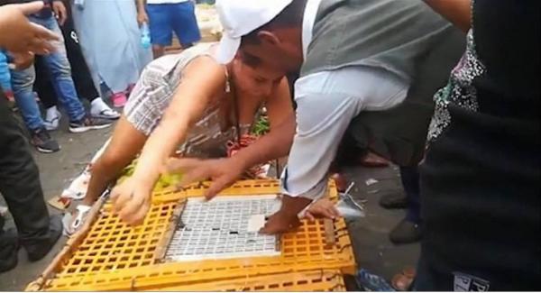 Du khách Anh cắn tay chủ cửa hàng để giải cứu lũ gà trong lồng