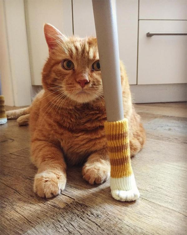 Bảo vệ sàn nhà của bạn với vớ chân mèo cho bàn ghế siêu cấp đáng yêu