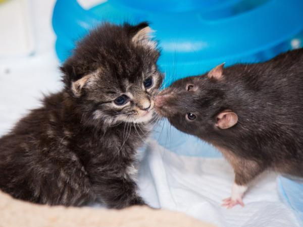 Những loài động vật khác nhau vẫn có thể trở thành đôi bạn thân thiết lạ kỳ