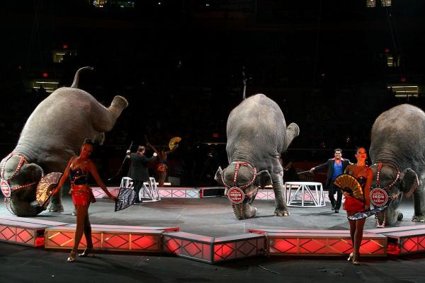 Chính phủ Đan Mạch mua lại rạp xiếc voi cuối cùng trong nước để xoá sổ xiếc voi
