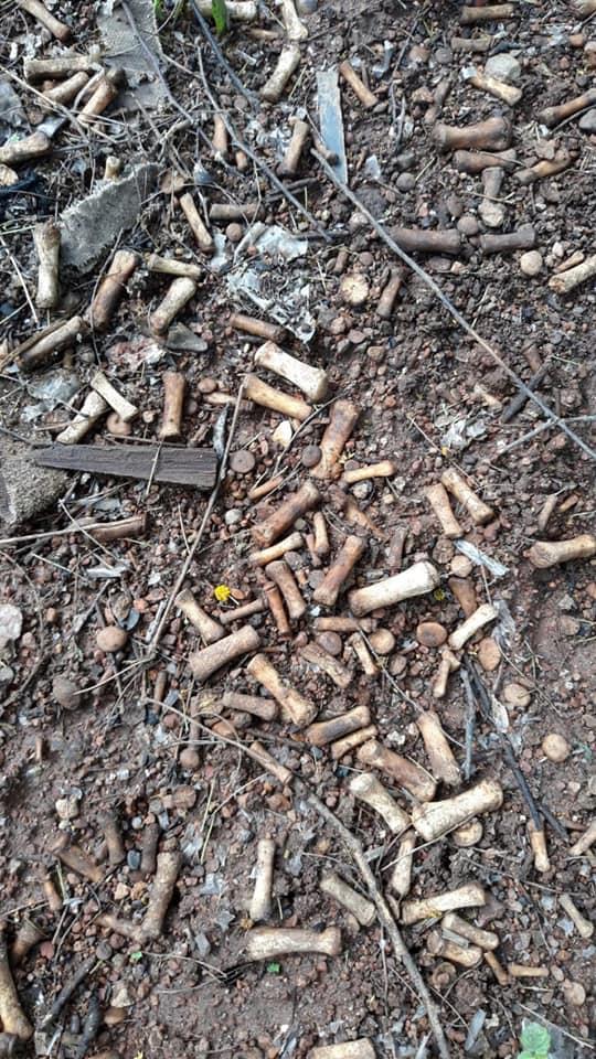 Kinh hoàng phát hiện 2000 mảnh xương người tại bãi rác gần khu căn hộ cao cấp ở Mexico
