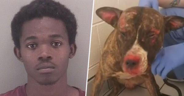 Thiêu chết con chó đã cắn con gái mình, ông bố lãnh án tù 5 năm
