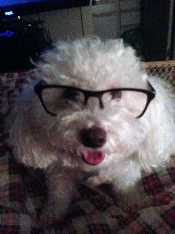 Người đàn ông đổ lỗi cho chú chó của mình mua phim người lớn khi anh ta không để ý