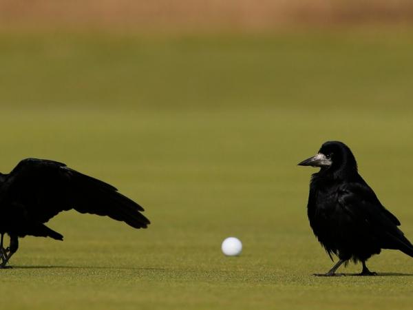 12 lần các loài động vật 'chiếm trọn spotlight' dù không phải nhân vật chính trong sự kiện thể thao